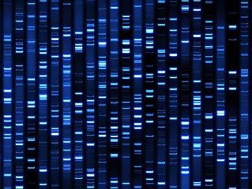 DNA-profiling